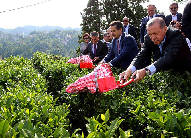 erdogancay1.jpg