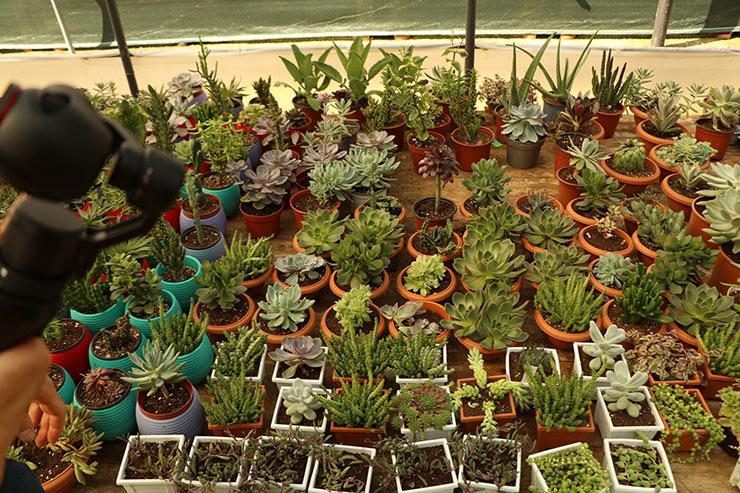 kaktus4.jpg