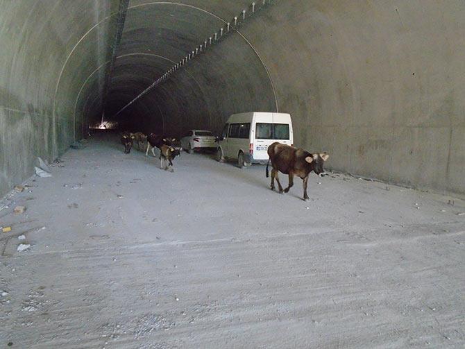 tunel1-003.jpg